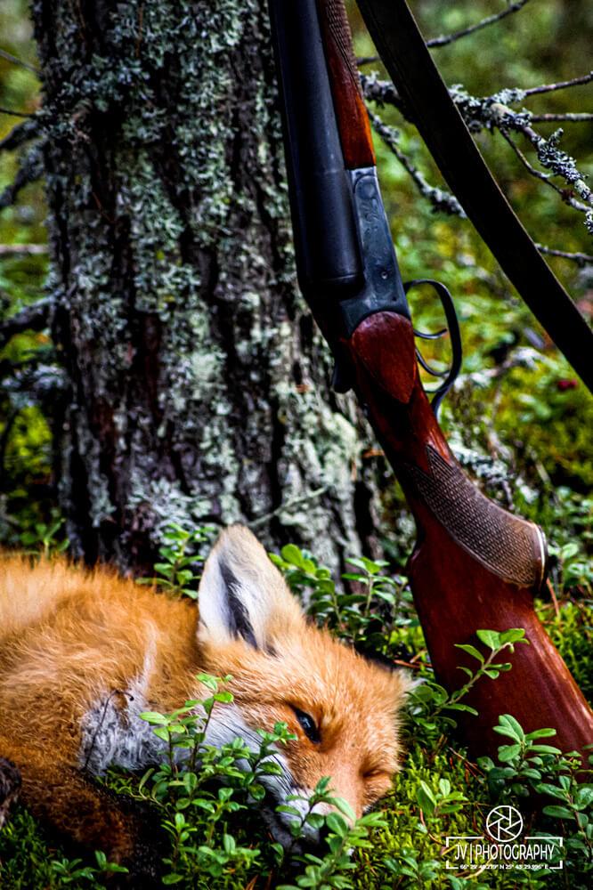 Kempeleen metsästys- ja kennelyhdistys - Metsästys
